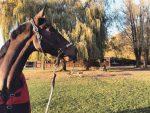 Les écuries du château d'Hem – Pension pour chevaux près de Lille